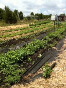 organic gardening