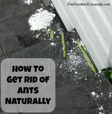 small black ants in house how to get rid of