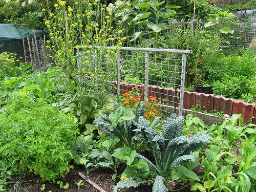 permaculturegarden