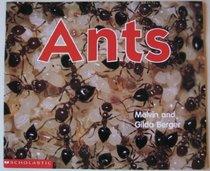 Ants - Berger