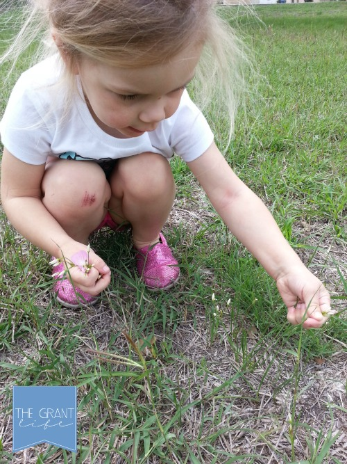 Take your kids on a wildflower trip