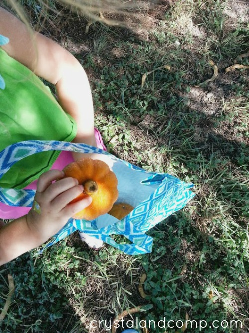 fall activities - looking for pumpkins