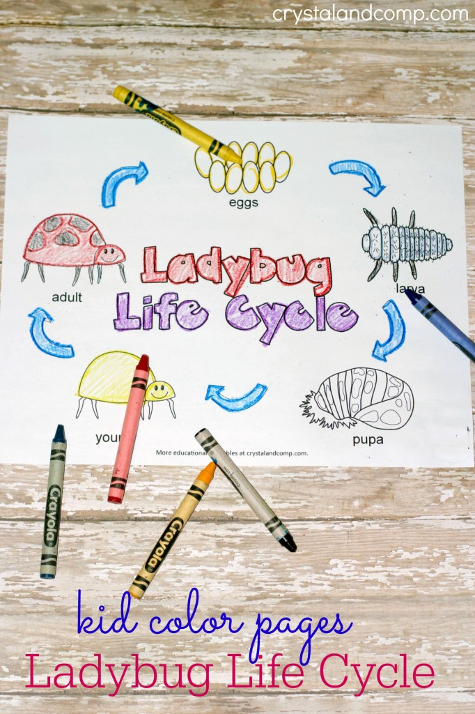 kid color pages ladybug life cycles