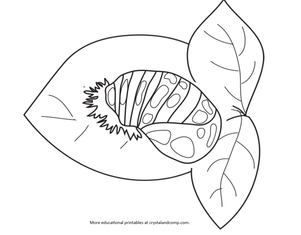 FREE Ladybug Coloring Pages to Print Out and Color! | 800x1024
