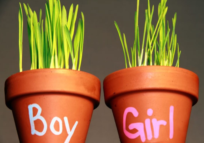 Organic Gender A Natural Way To Find Out The Gender Of