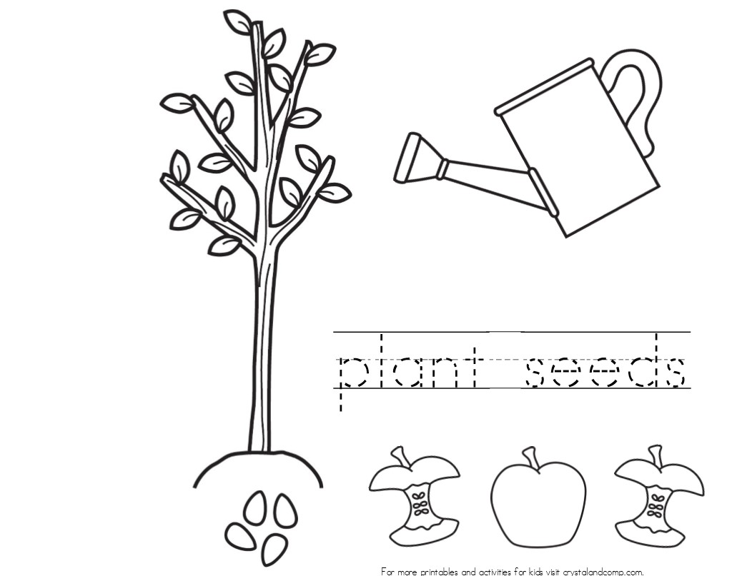coloring pages seeds and plants - photo #6