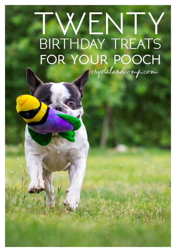 20 birthday treats for your dog