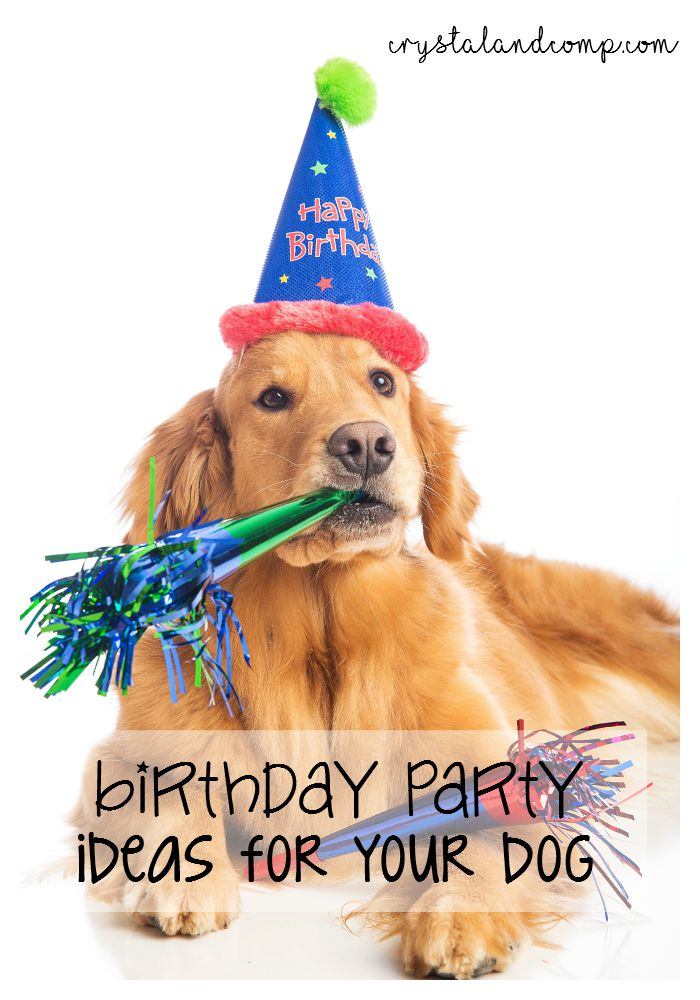 Dog Birthday Party Food Recipes