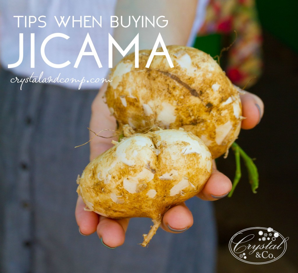 tips when buying a jicama