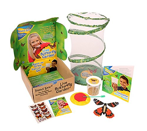 Grow Your Own Butterflies With This Kit