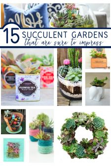 15 Succulent Gardens That Are Sure to Impress