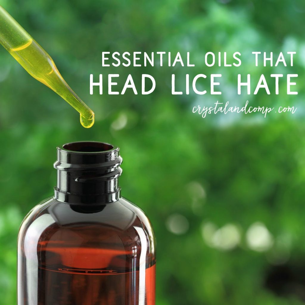 essential oils that head lice hate