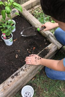 How to plant an herb garden with your kids